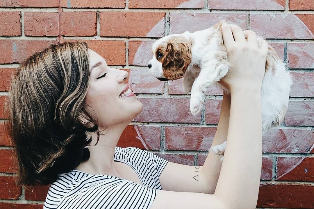 lillytales vlog cavalier king charles spaniel